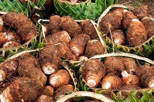 芋头种植,求资生得如意